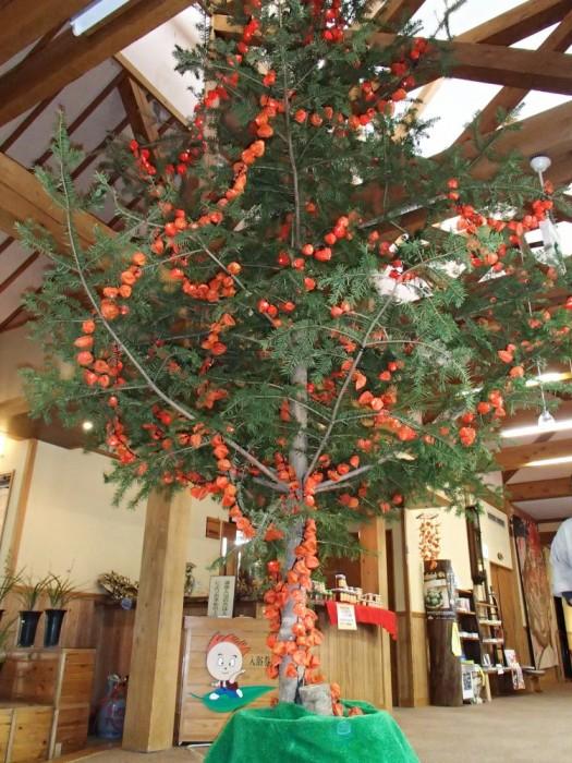ほおずきクリスマスツリー